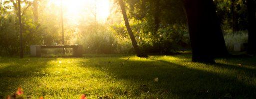 Mindfulness – Un stil de viata